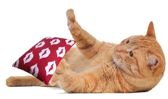 Spielkissen LIPS mit Bio Katzenminze oder Baldrianwurzel 9 x 14 cm